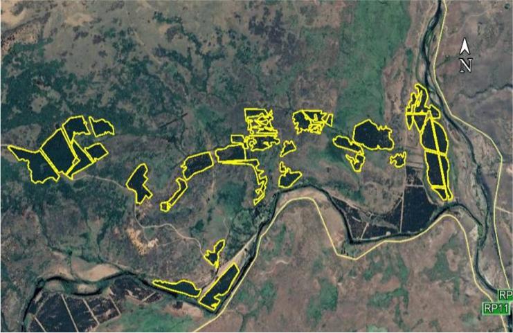 Se retomaron los trabajos de la segunda poda forestal