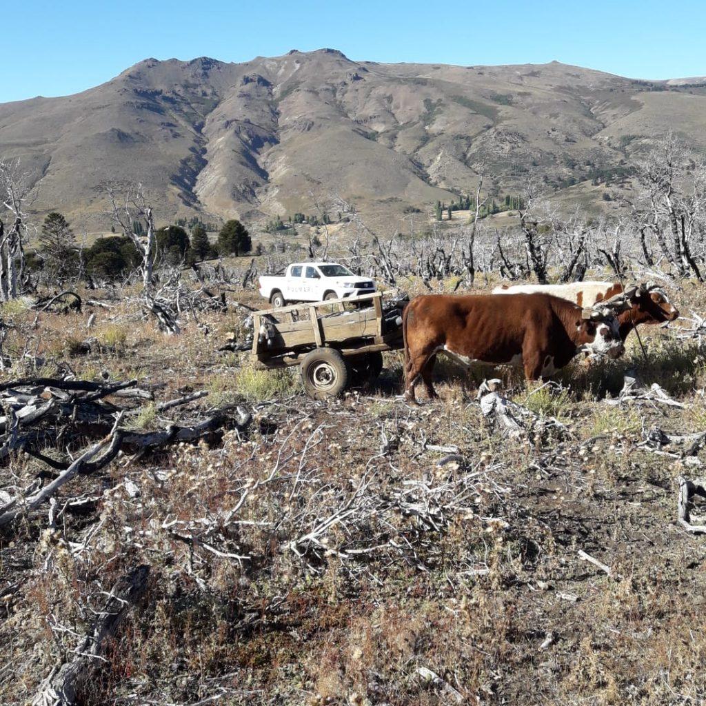 """La CIP desarrolló e implementó el """"Plan de Manejo Leñero del Operativo Leña"""" aprobado por la Ley de Bosques."""