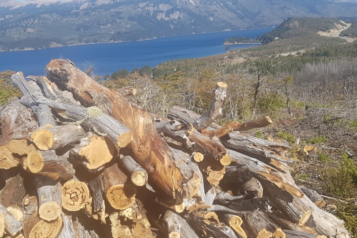 Plan Leñero 2021 de la C.I.P.: fueron más de 7.400 metros cúbicos de leña que benefició a comunidades mapuce y las localidades de Villa Pehuenia y Moquehue